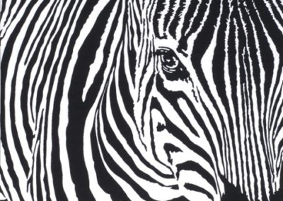 THE EYES HAVE IT – ZEBRA POSITIVE – 25″ X 26″