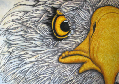 EAGLE – THE EYES HAVE IT – 30″ X 40″