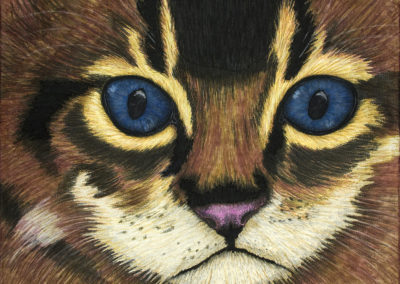 KITTEN – THE EYES HAVE IT – 24″ X 30″