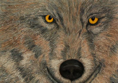 WOLF – THE EYES HAVE IT – 30″ X 40″