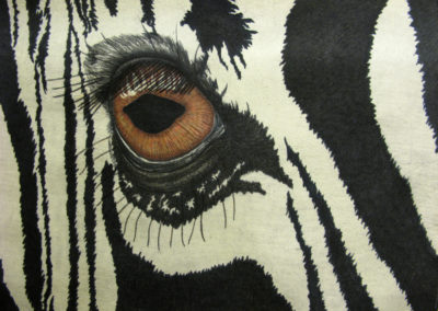 ZEBRA – THE EYES HAVE IT – 30″ X 40″