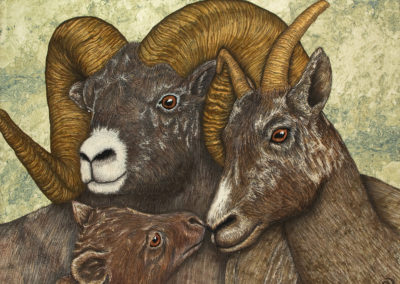 BIGHORN SHEEP – THE EYES HAVE IT – 30″ X 40″